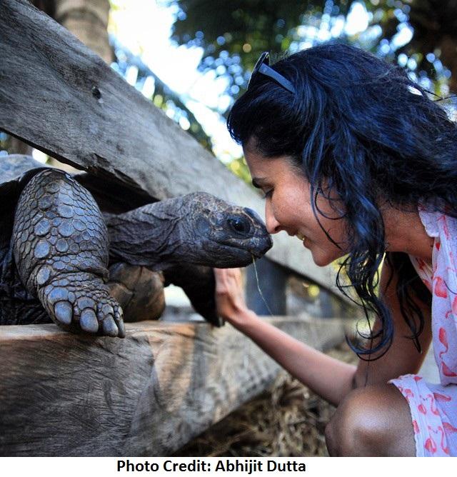 ashima tortoise